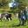 MORHAIN Edith - Productrice de fromages et produits laitiers BIO