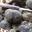 truffes fraîches au prix du domaine de Bramarel