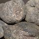 Truffe Ayme, la délicieuse truffe de France  TUBER BRUMALE