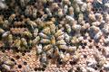 Le rucher de l'escoutay