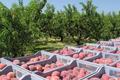 Fauriel Fruit