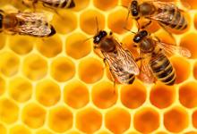 Miel du Jura production artisanal (acacia, toutes fleurs, crémeux, printemps)
