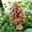 Miel du Jura production artisanal (acacia, toutes fleurs, crémeux, printemps), champignons secs