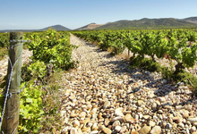 Vignobles Baron d'Escalin, domaine d'Escalin