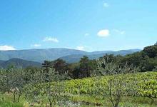 Domaine Piallat