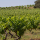 domaine le gourget