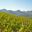 Les Vins Raymond Fabre Les Vins Didier Cornillon