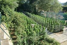 Vigne de Saint Jean, les vins de Valence