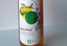 Melipom