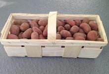 pommes de terre grenailles variété CHEYENNE
