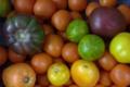Tomate ancienne variée