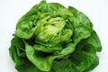 Salade Laitue