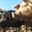 Les cochons de Dieulefit