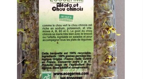 Graine Germées - Alfafa et Chou Chinois