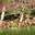 Chèvrerie du Bambois
