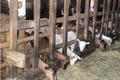 Ferme de la Biauce, fromages de chèvre de Nohant