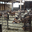La chèvrerie de Boisminard