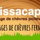 Chèvrerie Missacapri