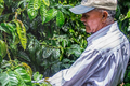 Café NICARAGUA - Terroir Dipilto - 100% Maragogype Premium