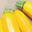 Courgette jaune