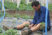 Eddy VRAY légumes et fruits bio