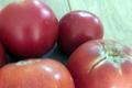 tomate bio, Eddy Vray