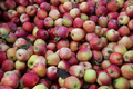 pommes, ferme de Viltain