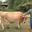 chèvrerie du Bouc Vert