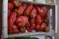 tomates cornues