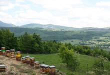 le rucher des noisetiers