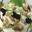 L'emulsion d'anguille fumee, crumble au Pruneau , d'Agen par Xavier Taffart