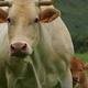 Colis de viande de veau, Ferme Larraldea