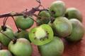Kiwaï ou kiwi de Sibérie bio