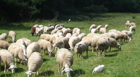 Ferme Mateua, Viande ovine Veau et bœuf en caissettes