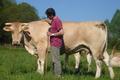 Viande de veau et de bœuf, blonde d'Aquitaine, FERME AROTXEX
