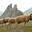 Ferme de la montagne verte - Bergère
