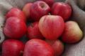 les fruits de Clazay, pomme gala