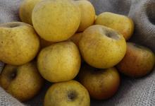 les fruits de Clazay, pomme clochard
