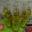 Petite bouteille de pétillant de pommes bio