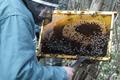 Emmanuel Lecamp, apiculteur