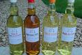 huilerie Lacroix, huile de tournesol