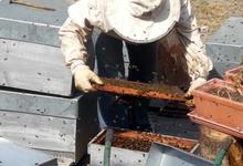 Hervé Villaneau apiculteur