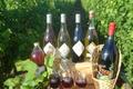 vins du Haut Poitou