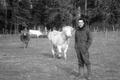 Vincent Grollier, viande bovine