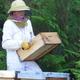 Frédérique HEL, apicultrice