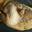 la ferme des 2L,   Demi poulet bio