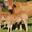 GAEC Alp-Rousse,  Viande bovine