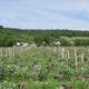 Domaine Les Chesnaies, Chinon Lambert