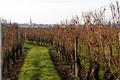 Vignoble De La Jarnoterie