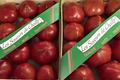 Tomates anciennes coeur de boeuf, Les Saveurs de Chailly